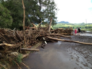 uprooted trees carried miles downstream, blocking the road